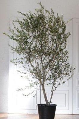 幸せを運ぶ木1