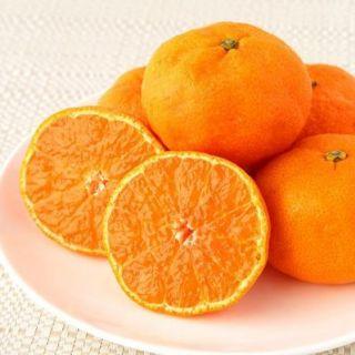 ハッピーオレンジ♪1