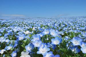 春の訪れ…♡1