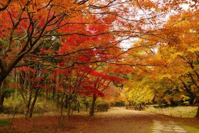 地元婚☆秋のフォトスポット1